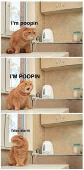 poopin cat